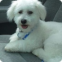 Adopt A Pet :: Danella - Cincinnati, OH