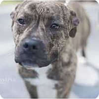 Adopt A Pet :: Roxbury - Reisterstown, MD