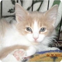 Adopt A Pet :: Blaine - Riverside, RI