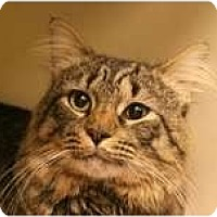 Adopt A Pet :: Mason - Arlington, VA