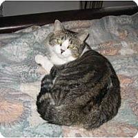 Adopt A Pet :: Missy - Portland, ME