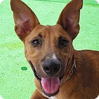 Adopt A Pet :: Roxy - Houston, TX