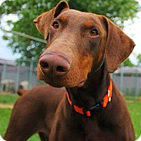Adopt A Pet :: Rowan - New Richmond, OH