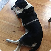 Adopt A Pet :: Dio - Greeley, CO