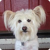 Adopt A Pet :: Clever - Vacaville, CA