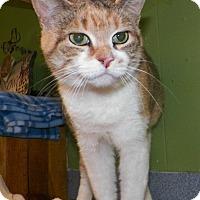 Adopt A Pet :: Peggy - Dover, OH