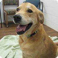 Adopt A Pet :: Payton - Lake Odessa, MI