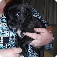 Adopt A Pet :: Daisy - Winchester, VA