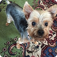 Adopt A Pet :: Sisi - Carmine, TX