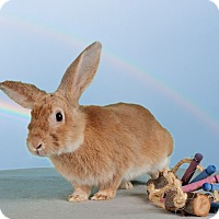 Adopt A Pet :: O'Malley - Marietta, GA