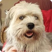 Adopt A Pet :: CHLOE-pending - Eden Prairie, MN