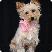 Adopt A Pet :: Heidi - SAN PEDRO, CA