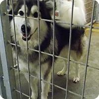 Adopt A Pet :: Olaf - Lewisburg, TN