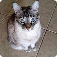 Adopt A Pet :: Kashi (JB) (4/3/2008) (Courtesy) - Orlando, FL
