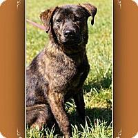 Adopt A Pet :: Nippy - Elizabethton, TN