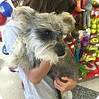 Adopt A Pet :: Nick - Houston, TX