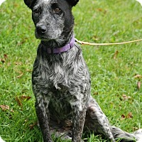 Adopt A Pet :: Rooney - Hanover, PA