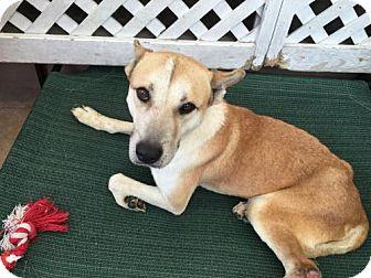 Shepherd (Unknown Type) Mix Dog for adoption in San Francisco, California - Luigi