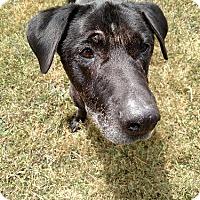Adopt A Pet :: Blacky - Towson, MD