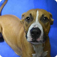 Adopt A Pet :: CHEWY - Ocala, FL