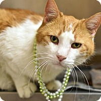 Adopt A Pet :: Whiskers (foster care) - Philadelphia, PA