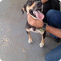 Adopt A Pet :: Jane - Providence, RI