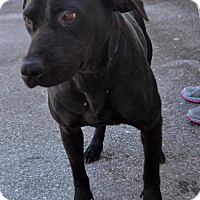 Adopt A Pet :: Lindsey - Whiteville, NC