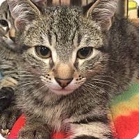 Adopt A Pet :: Chester - Gainesville, FL