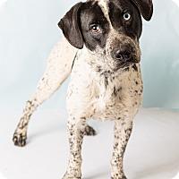 Adopt A Pet :: Ryder - Hendersonville, NC