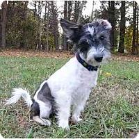 Adopt A Pet :: Pookie - Mocksville, NC