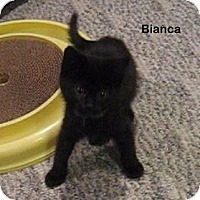 Adopt A Pet :: Bianca - Portland, OR