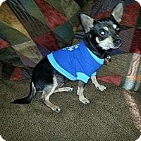 Adopt A Pet :: Roxy Emily - Shawnee Mission, KS
