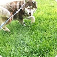 Adopt A Pet :: Rosie - Augusta County, VA