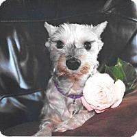 Adopt A Pet :: Bell - Sharonville, OH
