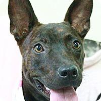Adopt A Pet :: Hermosa - San Francisco, CA