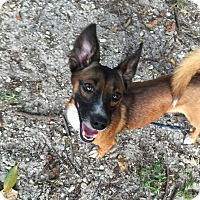 Adopt A Pet :: Moose - Coral Springs, FL