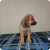 Adopt A Pet :: Lily Adoption pending - East Hartford, CT