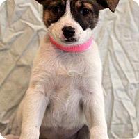 Adopt A Pet :: Marnie - Waldorf, MD