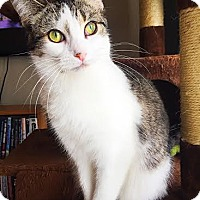 Adopt A Pet :: J Litter - Paisley - Williamston, MI