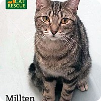 Adopt A Pet :: Millten - Oakville, ON