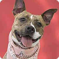 Adopt A Pet :: Sashka - Cincinnati, OH