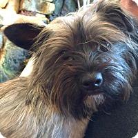 Adopt A Pet :: Petunia - Boulder, CO