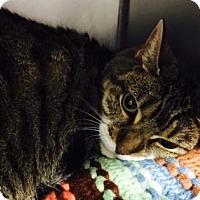 Adopt A Pet :: Samantha - Voorhees, NJ