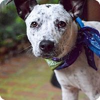 Adopt A Pet :: Tipper - Baton Rouge, LA
