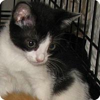 Adopt A Pet :: Panda - Bedford, VA