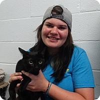 Adopt A Pet :: Cutie Pie - Elyria, OH