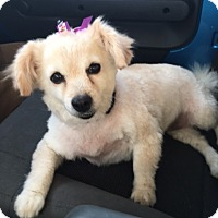 Adopt A Pet :: Sonya bonded with Ella - Las Vegas, NV