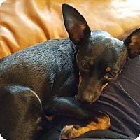 Adopt A Pet :: Prue - Montpelier, VT