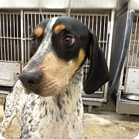 Adopt A Pet :: SAM - Upper Sandusky, OH