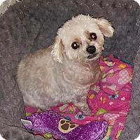 Adopt A Pet :: Pokawang - Renton, WA